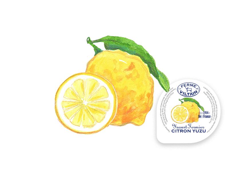 illustration_citron_yuzu_yaourt_fruits_viltain